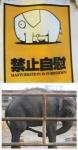 elefante rebelde