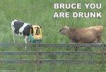 vaca bebeda