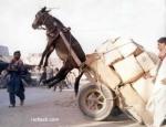 burro faz cavalo